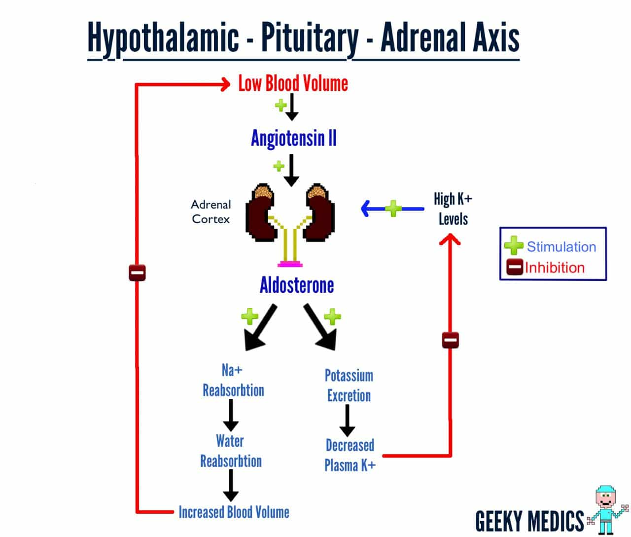 How The Adrenal Axis Works Geeky Medics
